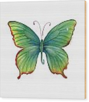 74 Green Flame Tip Butterfly Wood Print
