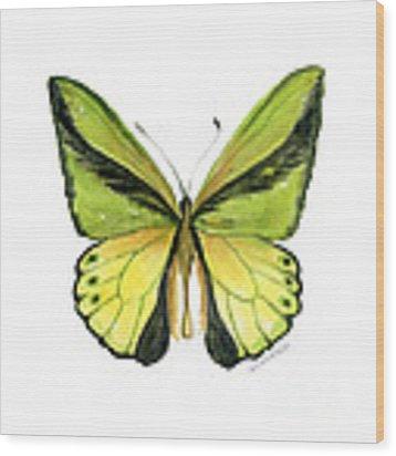 8 Goliath Birdwing Butterfly Wood Print by Amy Kirkpatrick