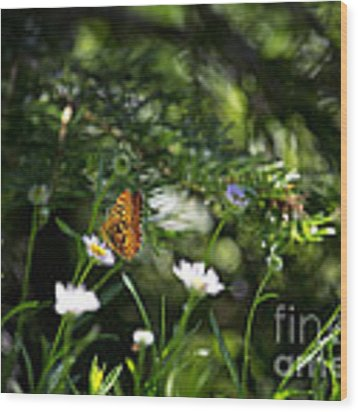 A Butterfly's World Wood Print by Belinda Greb