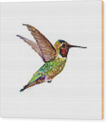 Anna Hummingbird Wood Print by Amy Kirkpatrick