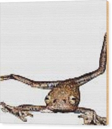 Annam Flying Frog Wood Print