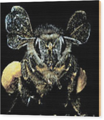 Bee Loaded With Pollen Wood Print