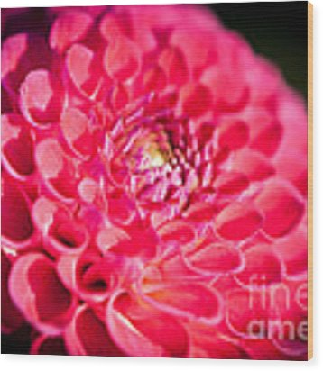 Blooming Red Flower Wood Print by John Wadleigh