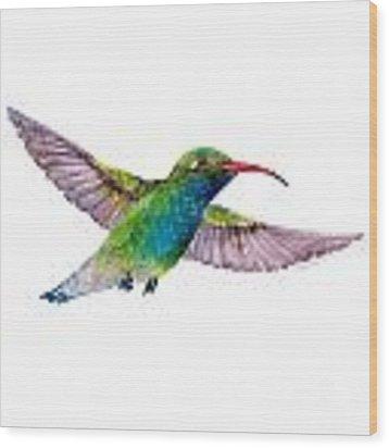 Broad Billed Hummingbird Wood Print by Amy Kirkpatrick