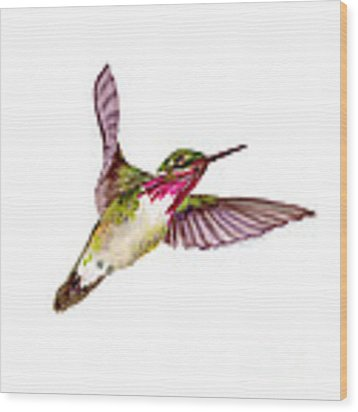 Calliope Hummingbird Wood Print by Amy Kirkpatrick