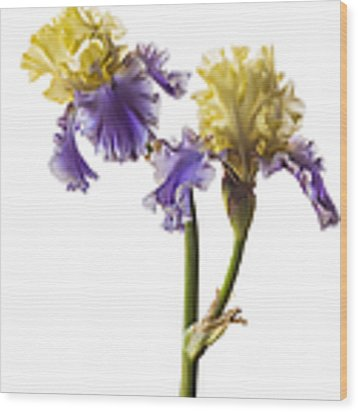 Edith Wolford Bearded Iris Wood Print by Endre Balogh