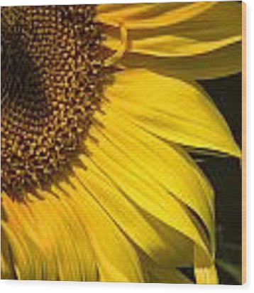 Find The Spider In The Sunflower Wood Print by Belinda Greb