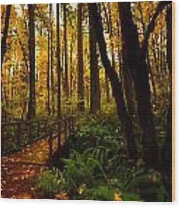 Forest Bridge Wood Print by Matt Hanson