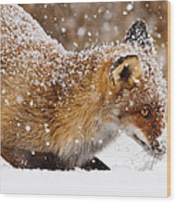 Fox First Snow Wood Print by Roeselien Raimond