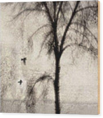 Glimpse Of A Coastal Pine Wood Print