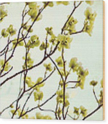 Green Dogwood Wood Print