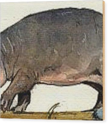 Hippo Walk Wood Print