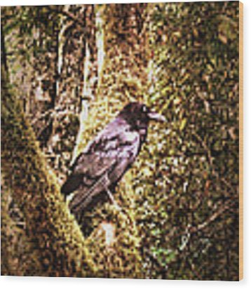 Muir Woods Raven 002 Wood Print by Lance Vaughn