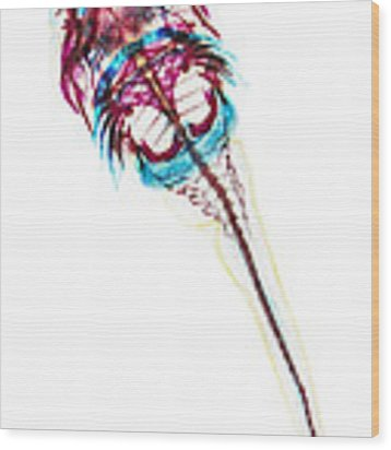 Northern Clingfish Wood Print