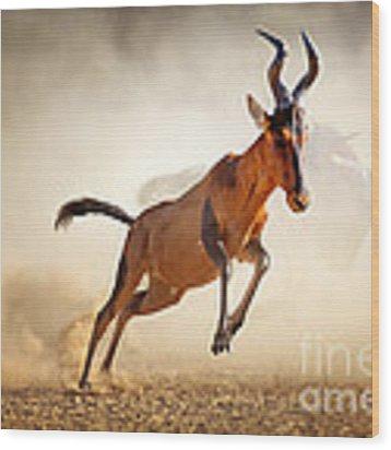 Red Hartebeest Running In Dust Wood Print