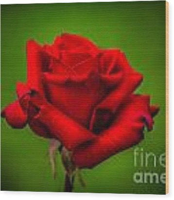 Red Rose Green Background Wood Print by Az Jackson