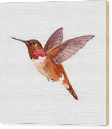 Rufous Hummingbird Wood Print by Amy Kirkpatrick