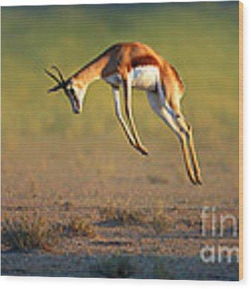 Running Springbok Jumping High Wood Print