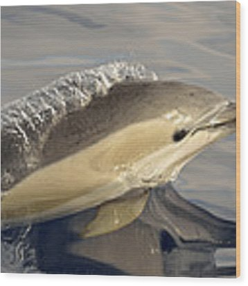 Short-beaked Common Dolphin Azores Wood Print by Malcolm Schuyl