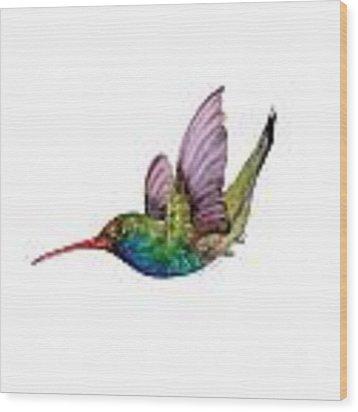 Swooping Broad Billed Hummingbird Wood Print