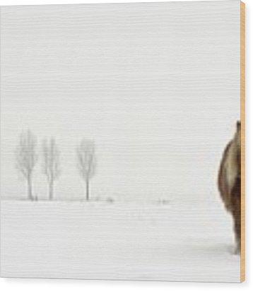 The Cold Pony Wood Print by Gert Van Den