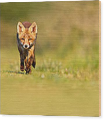The New Kit On The Grass - Red Fox Cub Wood Print by Roeselien Raimond
