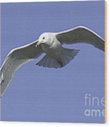 White Seagull In Flight Wood Print by Mae Wertz