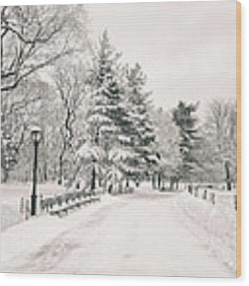 Winter Path - Snow Covered Trees In Central Park Wood Print by Vivienne Gucwa