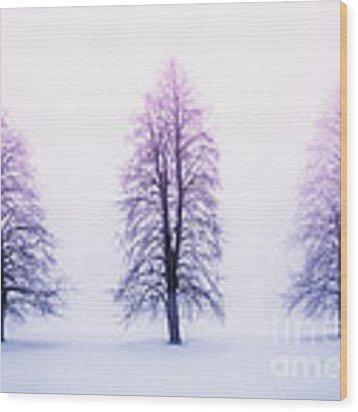 Winter Trees In Fog At Sunrise Wood Print
