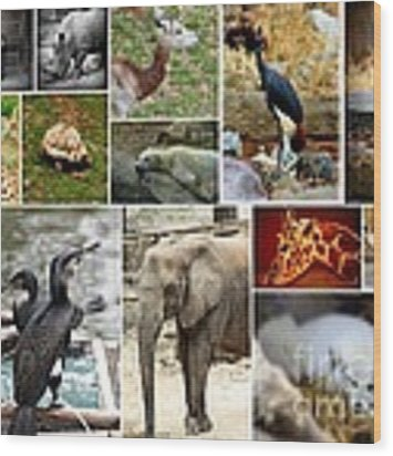 Zoo Collage Wood Print by Patti Whitten
