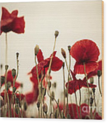 Poppy Flowers 03 Wood Print by Nailia Schwarz