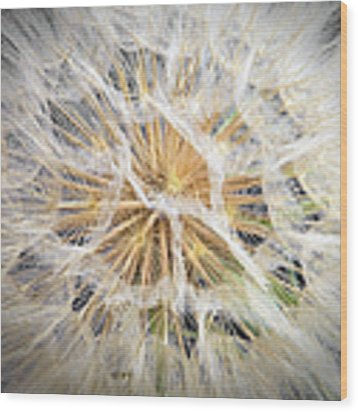 Dandelion Wood Print by Endre Balogh