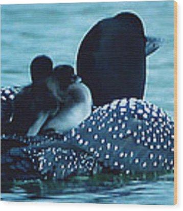 Duck Family Joy In The Lake  Wood Print by Colette V Hera  Guggenheim