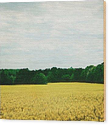 Field Of Yellow Wildflowers Wood Print