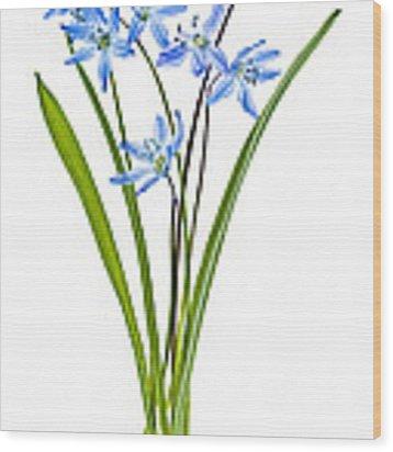 Blue Spring Flowers Wood Print by Elena Elisseeva