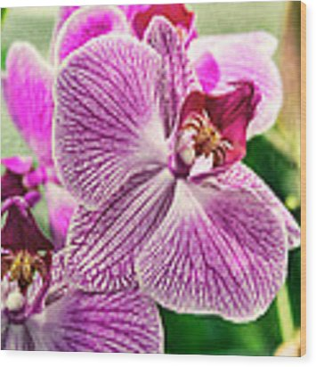 Orchid Textures Wood Print by Peter Chilelli