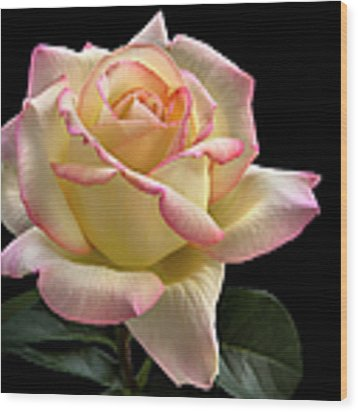 Perfect Rose Wood Print by Endre Balogh
