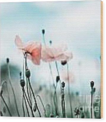 Poppy Flowers 02 Wood Print by Nailia Schwarz