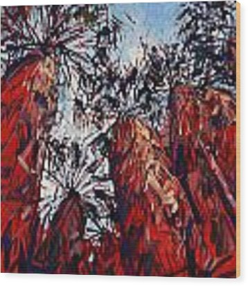 Red Borrego Palms Wood Print