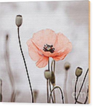 Red Corn Poppy Flowers 01 Wood Print by Nailia Schwarz