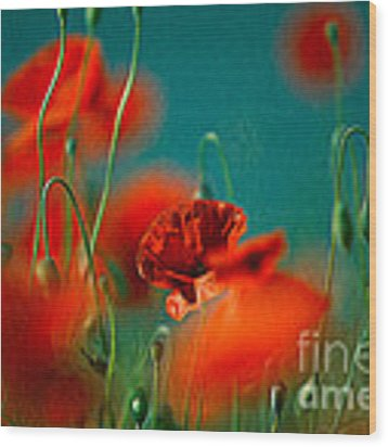 Red Poppy Flowers 05 Wood Print