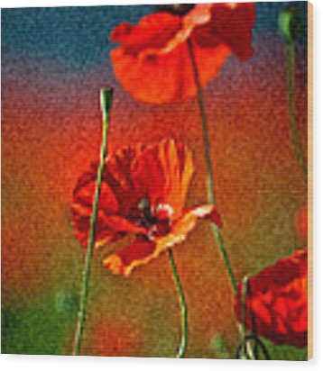 Red Poppy Flowers 08 Wood Print