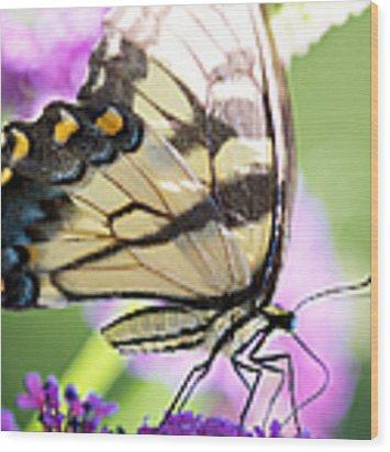 Swallowtail Butterfly Wood Print by Kim Fearheiley