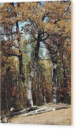 Autumn In Forest Wood Print by Henryk Gorecki