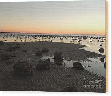 Beach Rocks Barnacles And Birds Wood Print