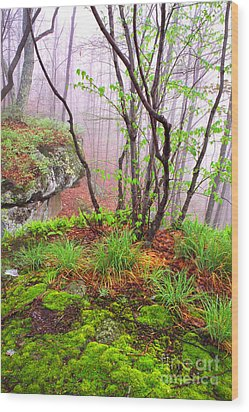 Foggy Spring Morning Wood Print by Thomas R Fletcher
