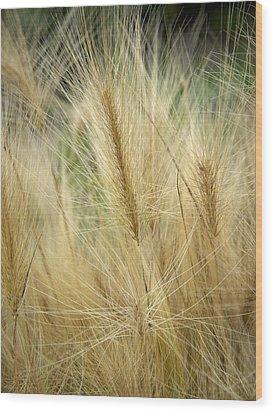 Foxtail Barley Wood Print by Jouko Lehto