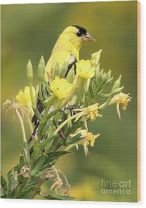 Wood Print featuring the photograph  Goldfinch by Debbie Stahre