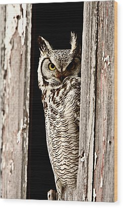 Great Horned Owl Perched In Barn Window Wood Print by Mark Duffy