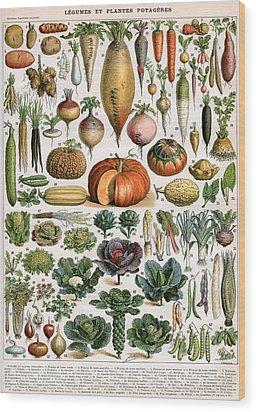 Illustration Of Vegetable Varieties Wood Print by Alillot